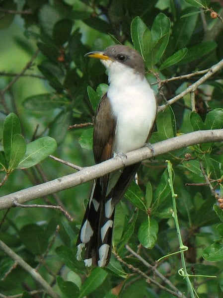 Birding Saved My Lockdown Sanity, But I Still Went Cuckoo