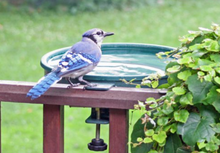 Load image into Gallery viewer, Bird Bath - Deck Clamp