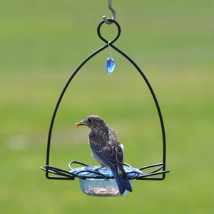 Bluebird Flower Feeder