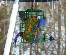 Load image into Gallery viewer, Suet & Seed Cake Hanging Feeder