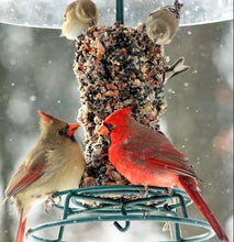 Load image into Gallery viewer, Woodpecker Feast - Large Cylinder