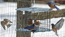 Load image into Gallery viewer, Bluebird Caged Mealworm Feeder - Copper