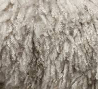 lanolin from sheep wool