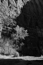 Load image into Gallery viewer, Trees of Zion National Park