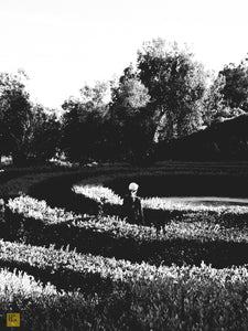The Maze, Orange County, California
