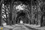 Load image into Gallery viewer, Cypress Tree Tunnel, California