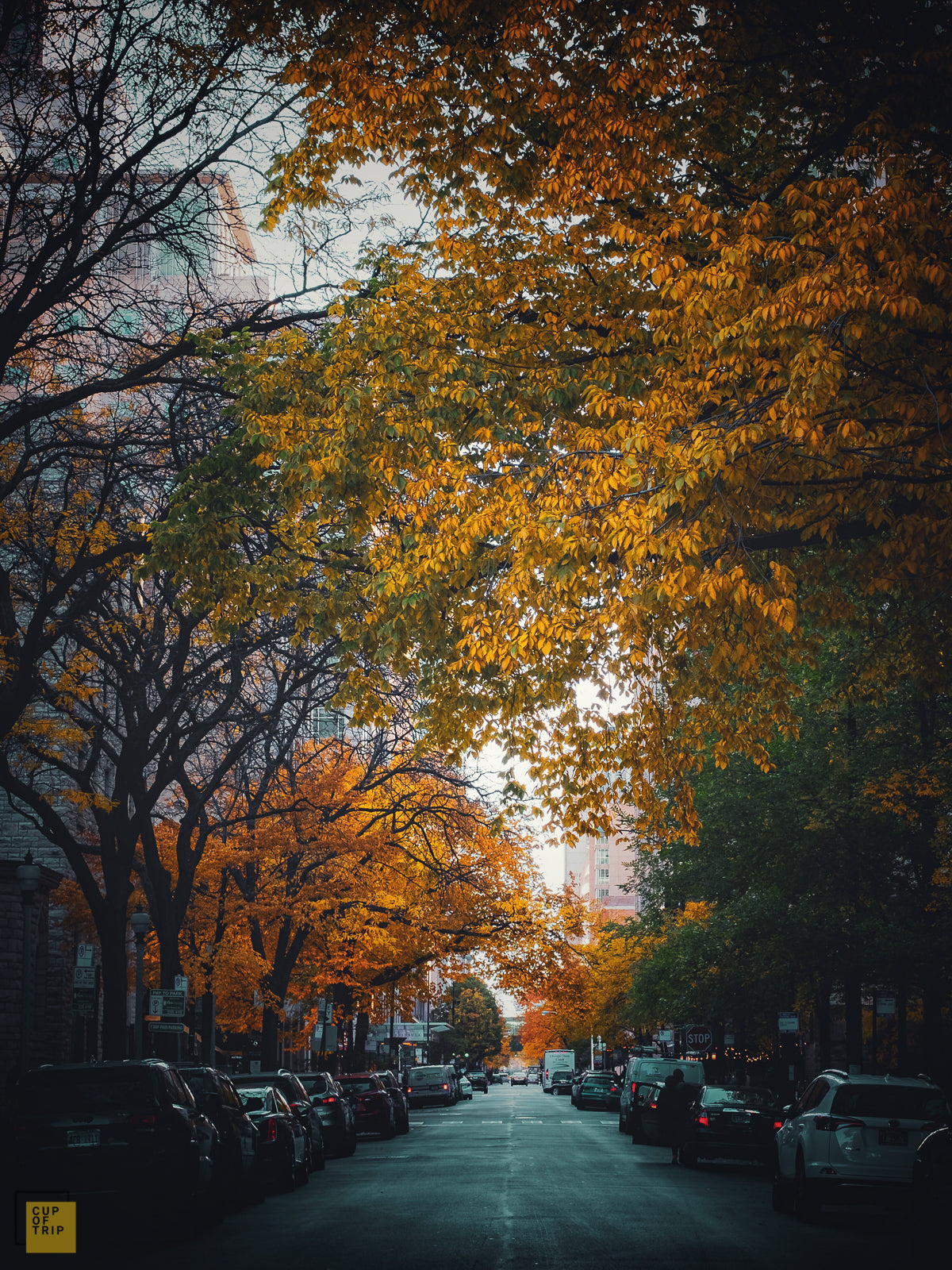 Autumn in Downtown Chicago