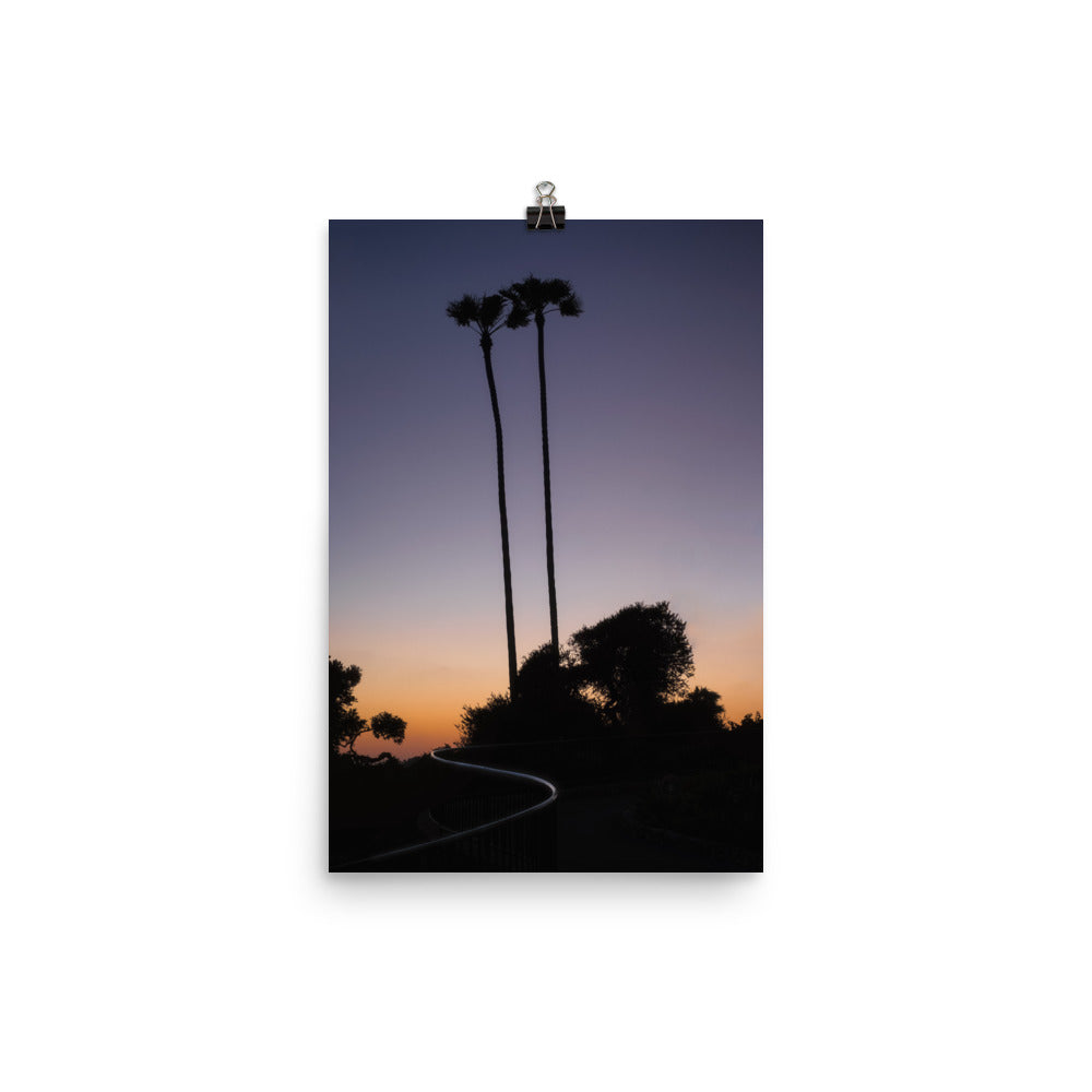 Palm Trees During Sunset in Laguna Beach