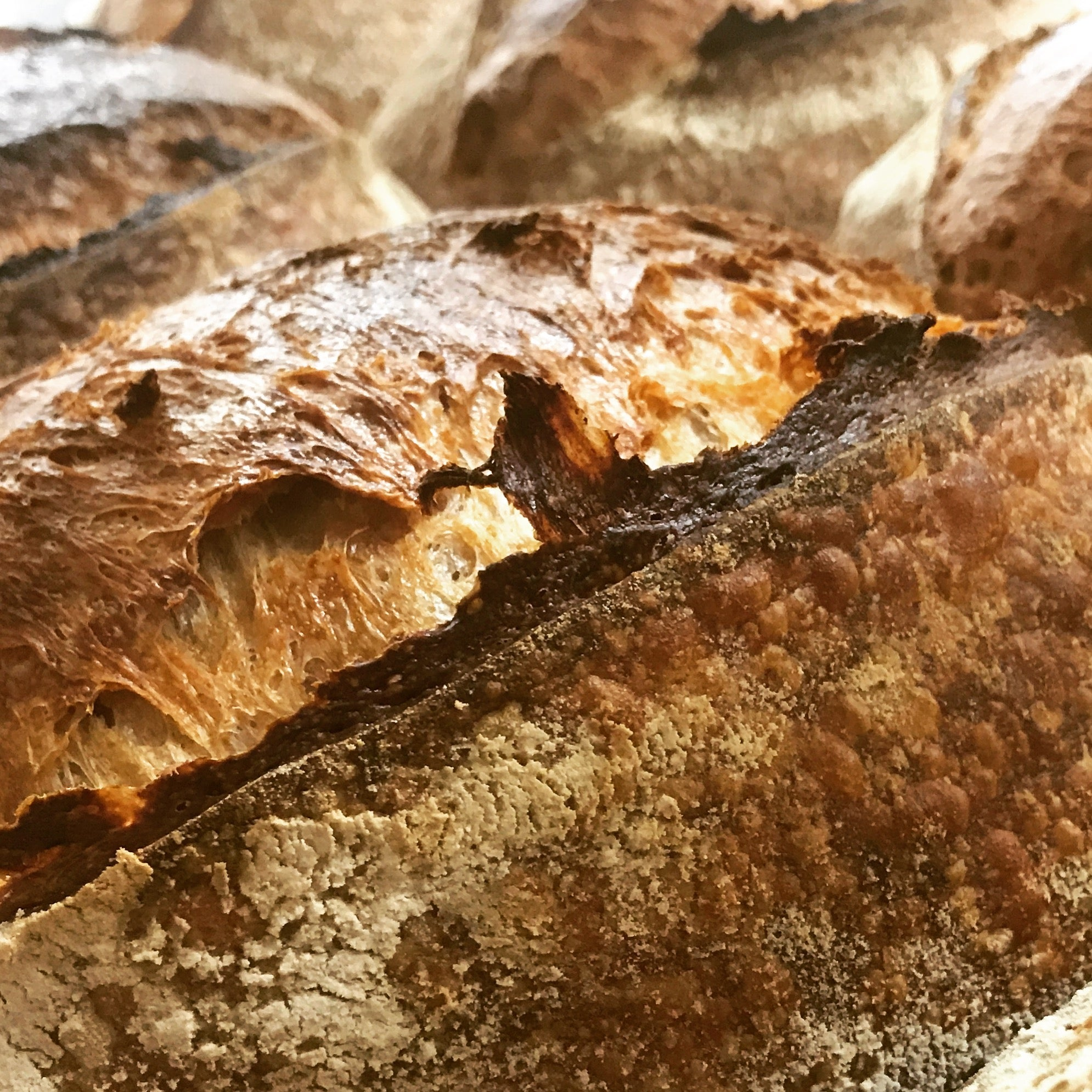 Country sourdough bread, campagne