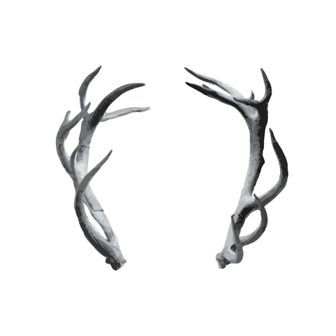 Antlers Tattoo | Habitatt Supply Co | Finest Quality Designed Temporary Tattoos