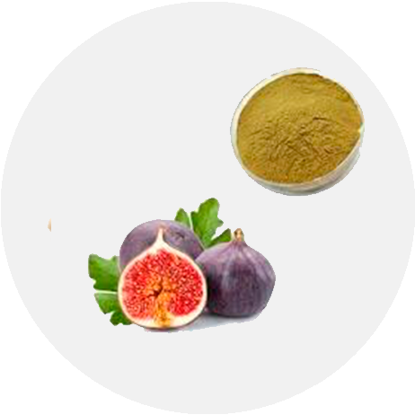 Fig Leaf Extract