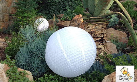 Chinese lantern use in garden as decor.