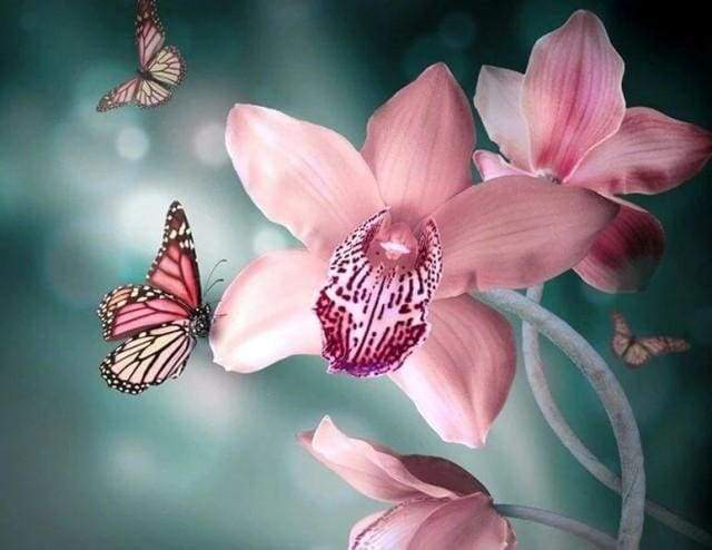 Diamond Painting, Schmetterling und Orchideen