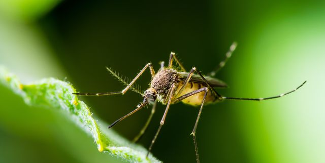 4 natural ways of getting rid of mosquitoes