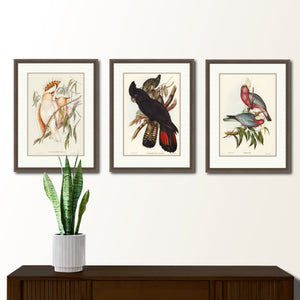 Set of three framed Gould prints, Cockatoos