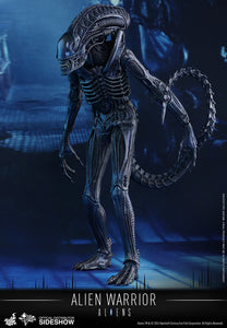 HOT TOYS ALIENS - ALIEN WARRIOR 12 IN FIGURE