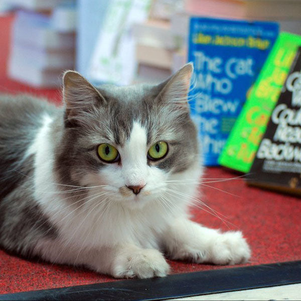 Emily Grace - cat - Edisto Bookstore