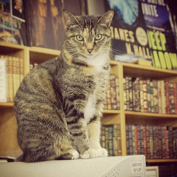 Teacup - cat - Haslam Bookstore