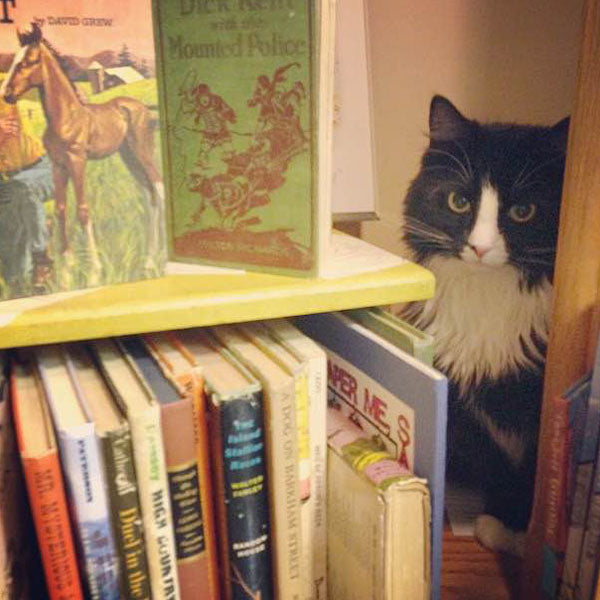 Trixie - cat - Longfellow Books