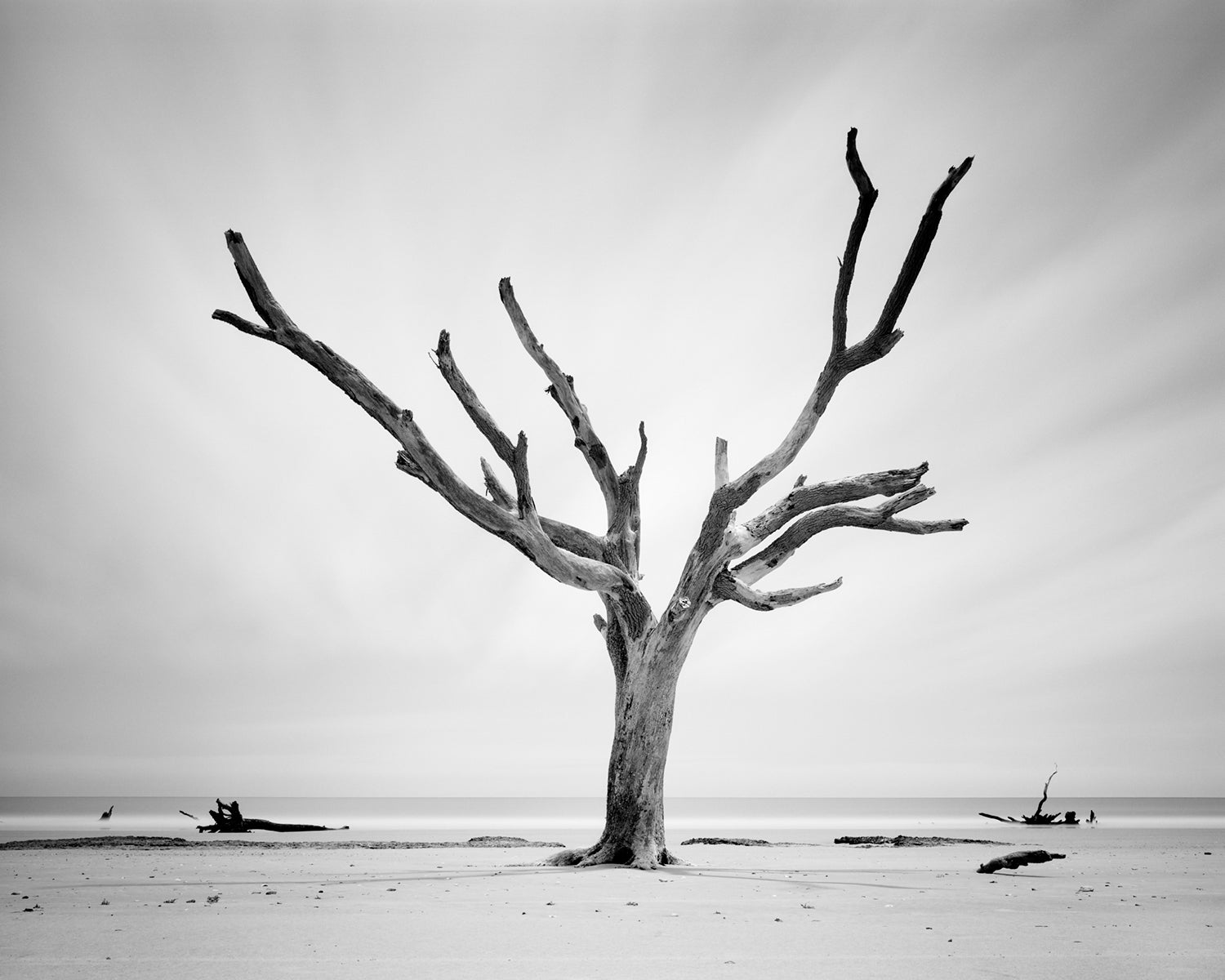 Film photo taken by Mike Basher of a tree at Hunting Island