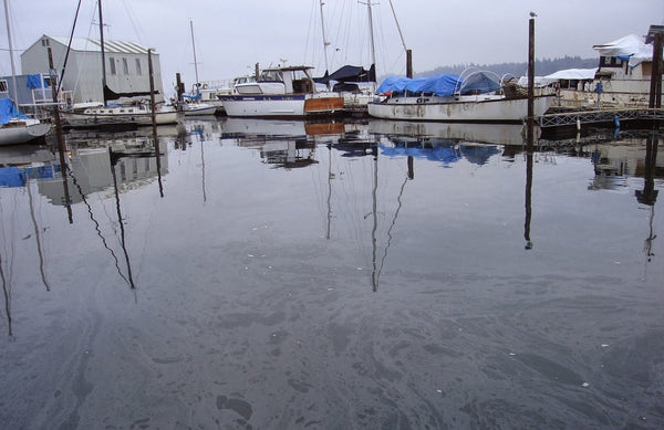 Oil in marina