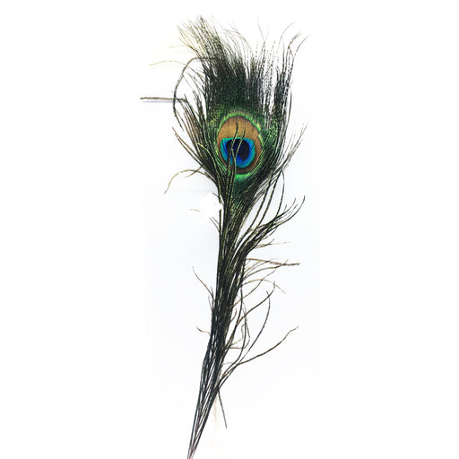 For Best Price in Abu Dhabi, UAE Peacock Eye Feather