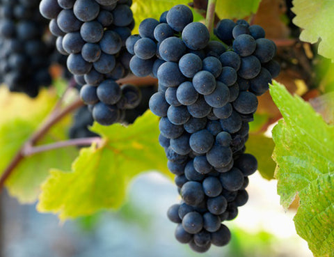 Beyond Basics: Understanding Pinot Noir - Tuesday, April 24, 2018