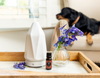 How To Neutralize Pet Odors With Essential Oils