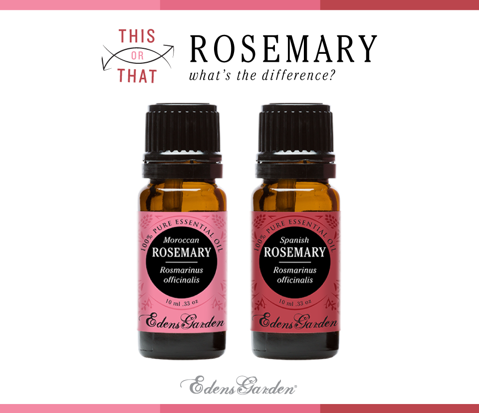 Rosemary essential oils - what's the difference?