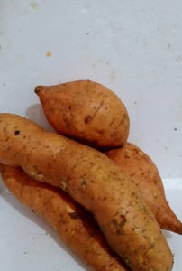 Sweet Potato (Indonesia) 500g~600g