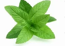 Mint Leaves / Daun Pudina 100g