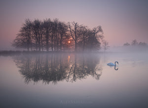 Serenity, Richmond Park Photography Print