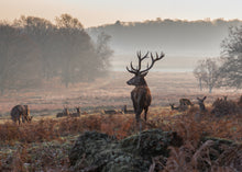 Load image into Gallery viewer, Monarch of the Glen Richmond Park Print