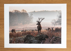Monarch of the Glen Richmond Park Print