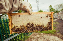 Load image into Gallery viewer, Local Beekeeping Experience (2021 Season)