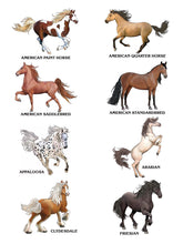 Load image into Gallery viewer, Creative Haven How to Draw Horses