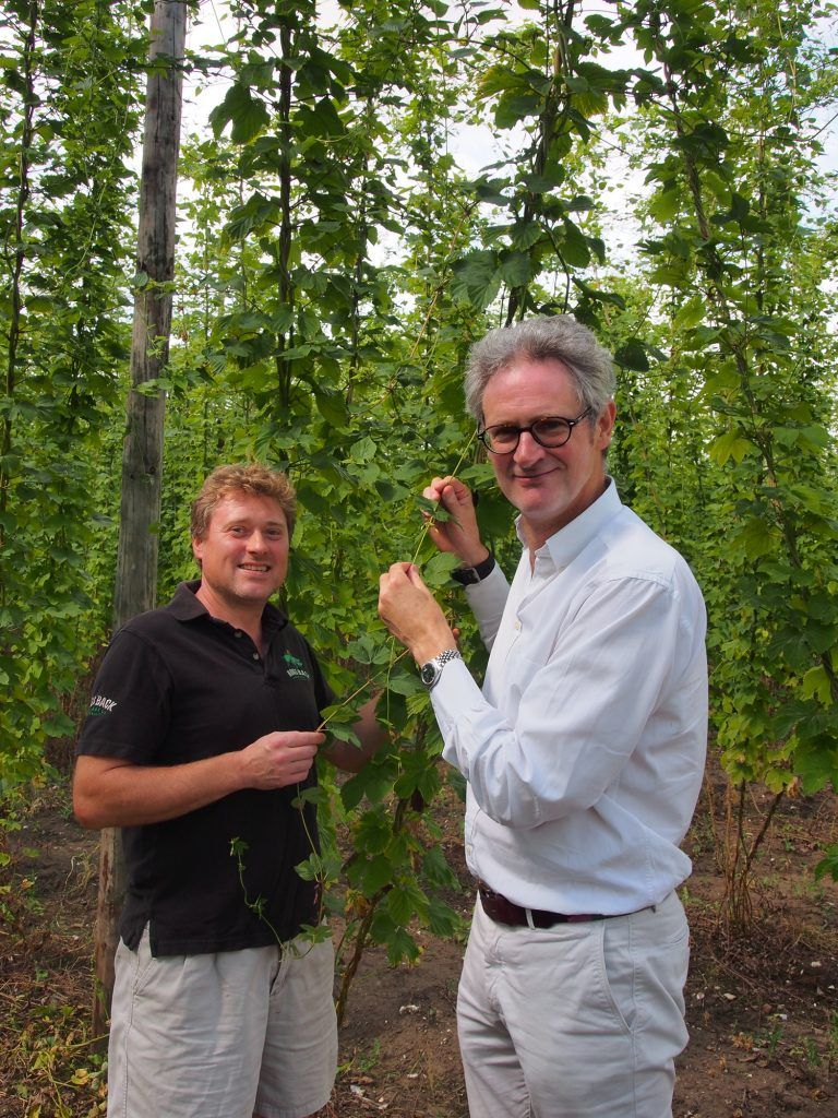 Matthew King, hop garden manager (left) and Rupert Thompson, managing director, check the progress of hop plants in the Hogs Back Brewery Hop Garden.