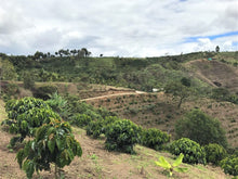 Load image into Gallery viewer, Três Marias Coffee - Colombia Palmera