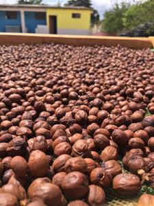 Carbonic Maceration Venezuela - Absolute Cherry 130g - Tres Marias Coffee Company