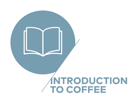 Barista Course - SCA Introduction to Coffee - Tres Marias Coffee Company