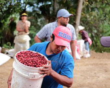 Load image into Gallery viewer, Três Marias Coffee - Nicaragua Santa Teresa de Mogoton Natural - Tres Marias Coffee Company