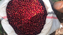 Load image into Gallery viewer, Três Marias Coffee - Ethiopia - Guji Shakiso Organic Natural - Tres Marias Coffee Company