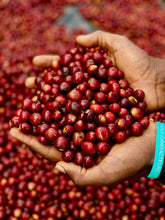 Load image into Gallery viewer, Três Marias Coffee - Ethiopia - Bombe Natural