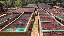 Load image into Gallery viewer, Três Marias Coffee - El Salvador Santa Matilde - Tres Marias Coffee Company