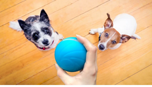 Load image into Gallery viewer, 【Buy 2 FREE 1】OldSchool™ Motion Ball For Pets