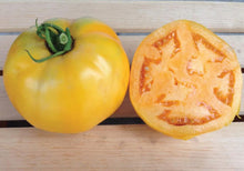 Load image into Gallery viewer, Golden Jubilee Tomato Start