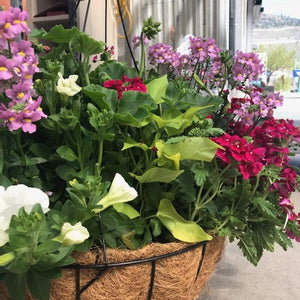 Annual Hanging Basket $79.99