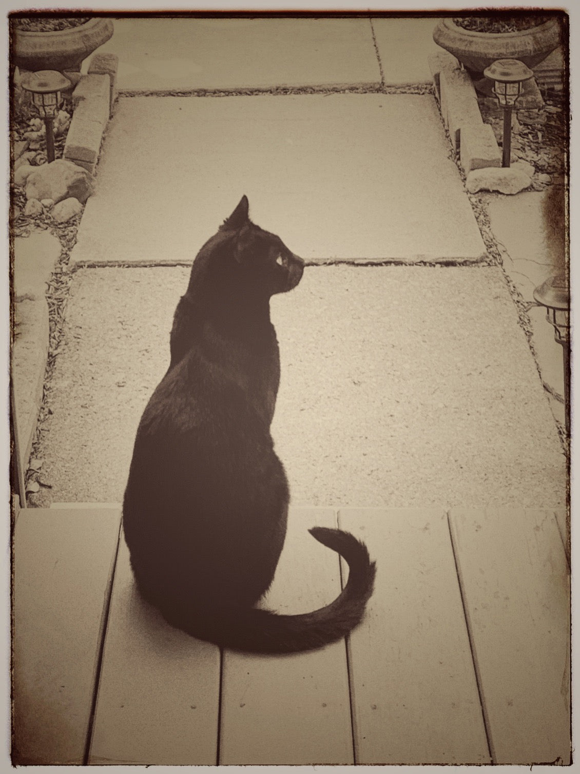 Today we had a beautiful black cat as a visitor on our porch.