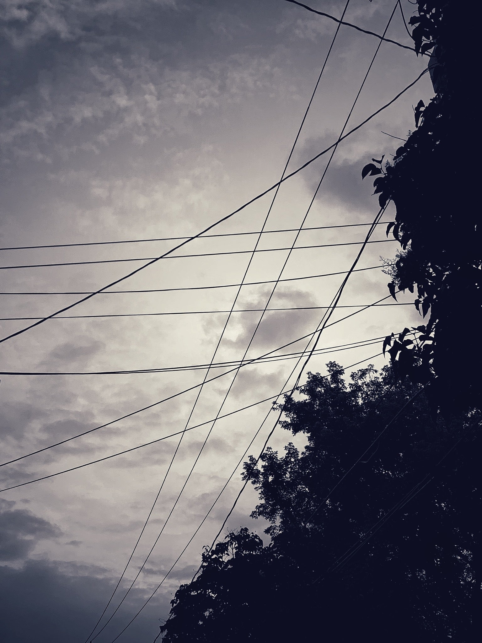 A multitude of electric lines and cables crossing in every direction