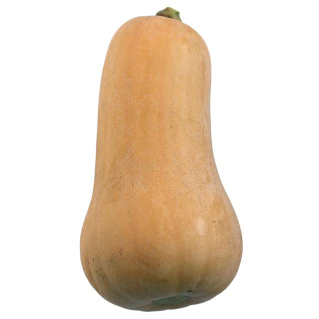 Butternut Squash Large (each)